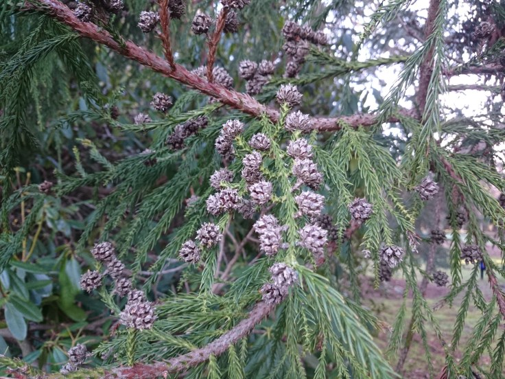 Awesome pine cones.